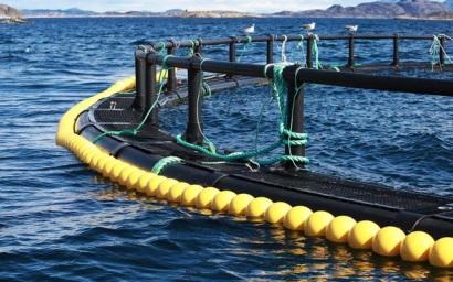 Trung Quốc tiếp tục chiến dịch môi trường, ảnh hưởng đến sản lượng thủy sản nuôi
